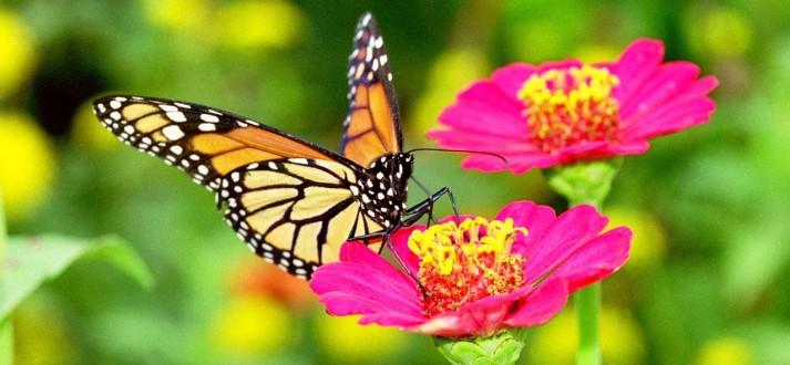 monarch-on-san-rafael-FI P1L
