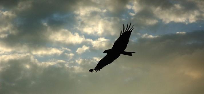 indian-eagle-FI P1stL