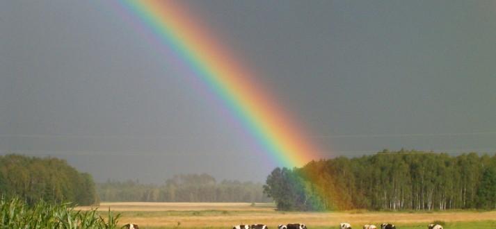 rainbow-FI SC